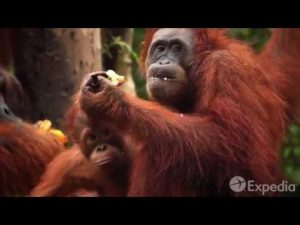 Copy of Malaysia Vacation Travel Guide   Expedia   YouTube 360p