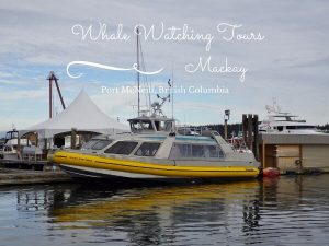 Mackay Whale Watching Tours {Port McNeill BC}