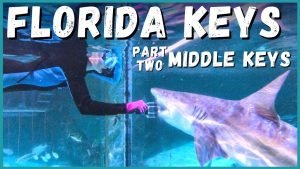 🦈🏝️ Ultimate Florida Keys Road Trip: Middle Keys What to See, Do and Eat! | Newstates in the States