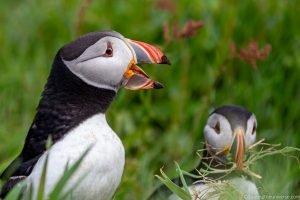 A Beginner's Guide to Birdwatching