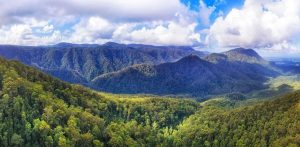 25 Biggest Forests in the World (For Your World Travel Bucket List)