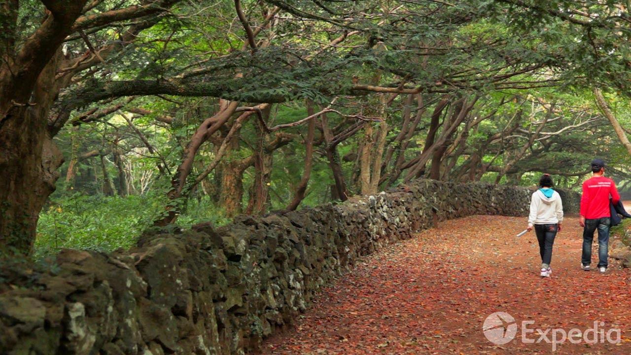 Bijarim Forest, Jeju Island Vacation Travel Guide   Expedia
